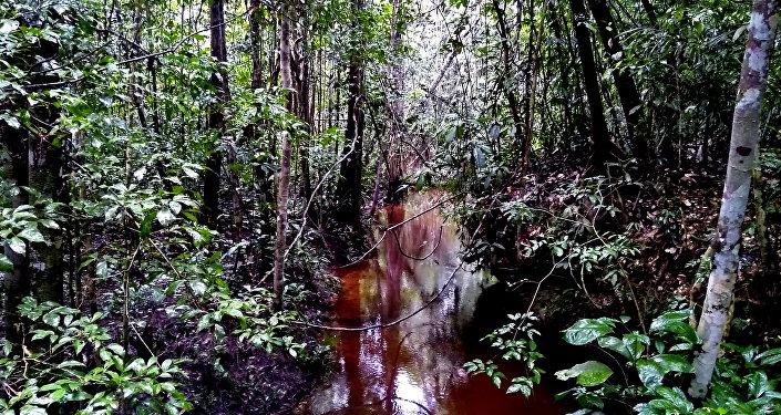 Una escena de la selva del Amazonas