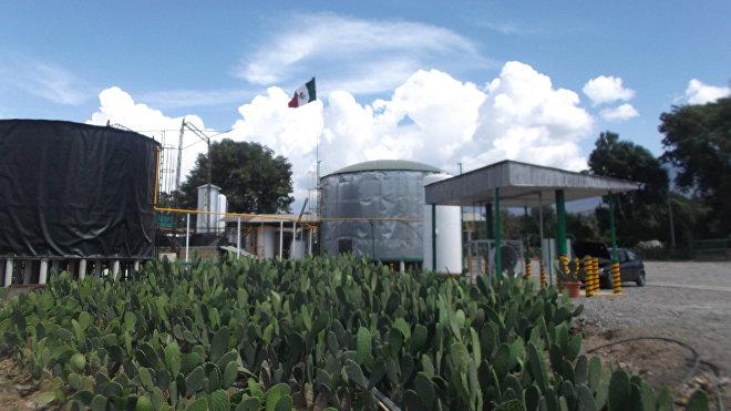 La planta de NopaliMex, que transforma el cactus —nopal— en energía para usos productivos