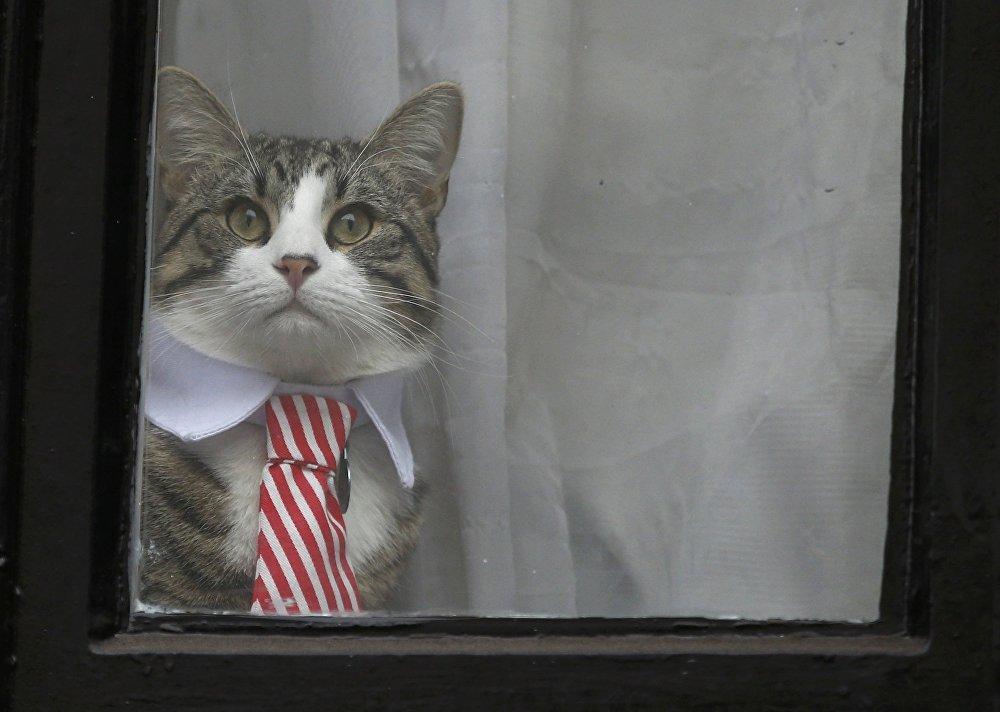 El gato de Julian Assange aparece en la ventana de la Embajada de Ecuador en Londres