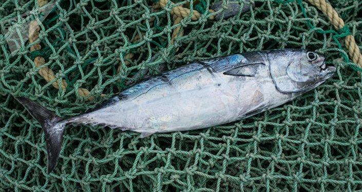 Un pescado