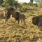 Un león pone firmes a otros dos que quieren acabar con él