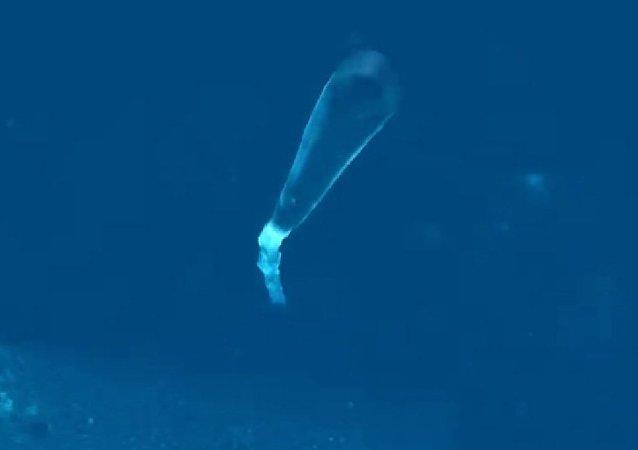 Dron submarino ruso Poseidon