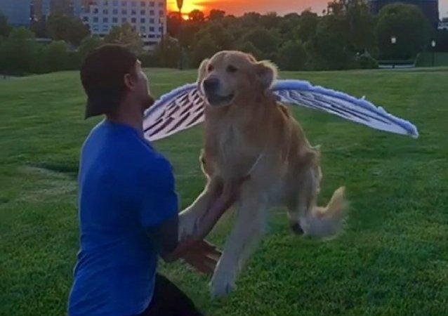 Un internauta disfraza su mascota de angel