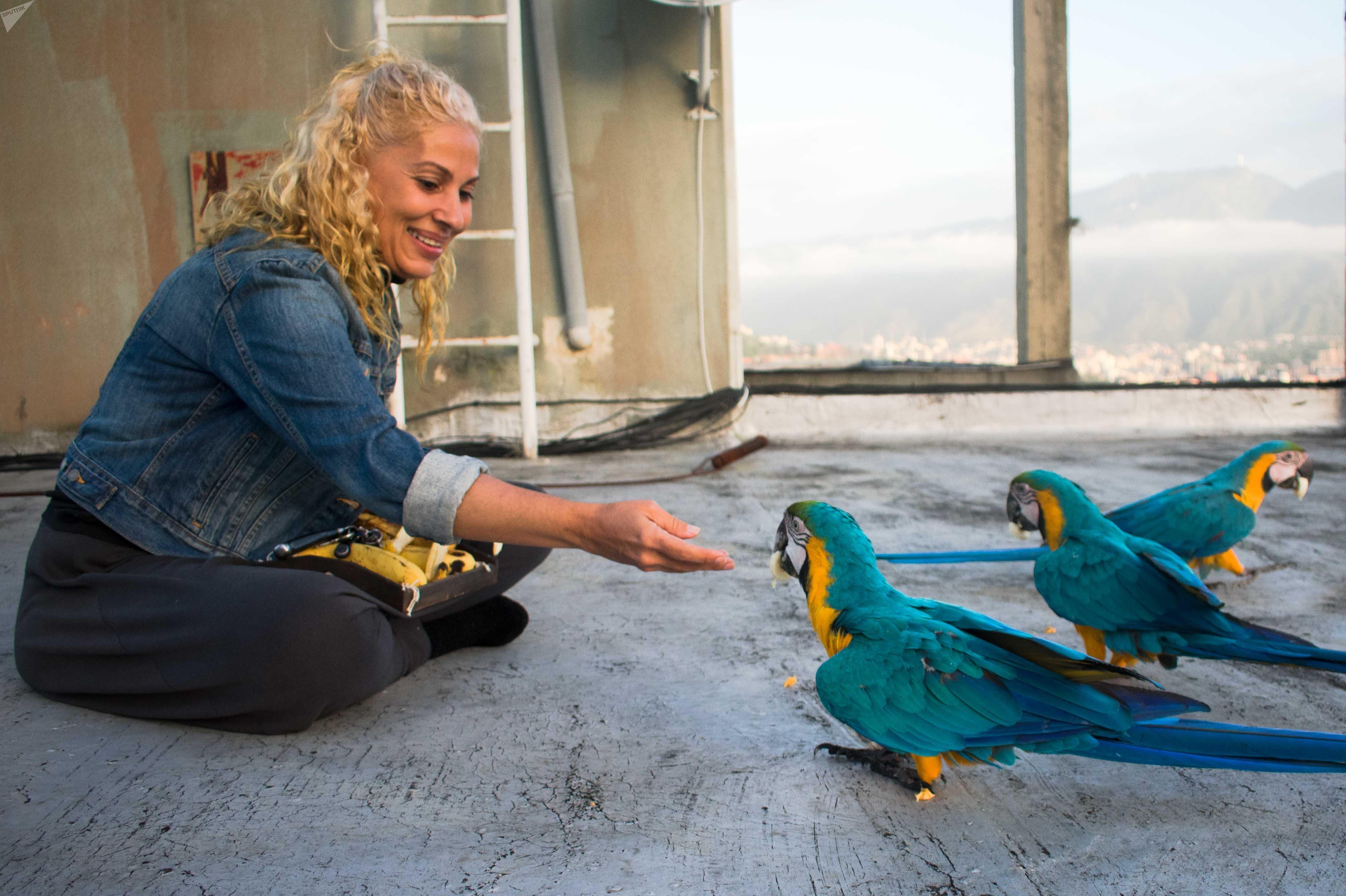 Carmen Borges alimenta a diario a las guacamayas desde la azotea de su edificios y asegura que estas aves se han convertido en un motivo de alegría para los habitantes de Caracas