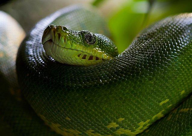 Una serpiente, imagen referencial