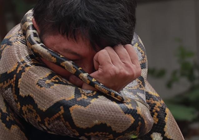 Cómo se puede escapar del abrazo mortal de una pitón