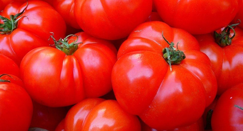 Tomates (imagen referencial)