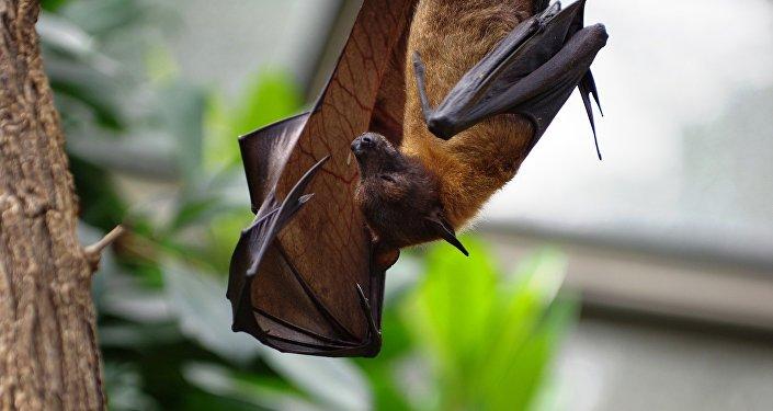 Un murciélago, imagen referencial