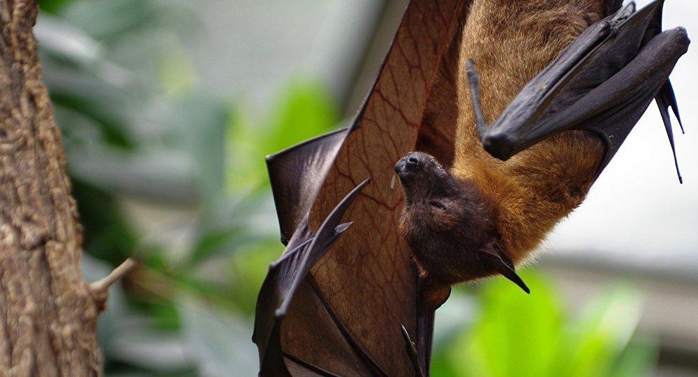 Descubren una especie de dinosaurio que volaba con alas de murciélago