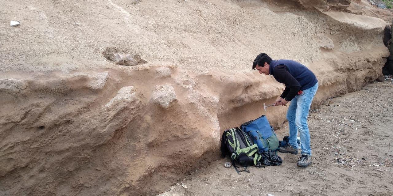 Hallazgo de un fémur de perezoso gigante en Mar del Plata, Argentina