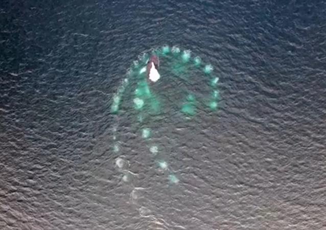 Burbujas mágicas: espectacular técnica de ballenas jorobadas