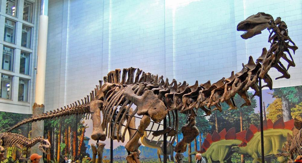 El esqueleto de un dinosaurio saurópodo