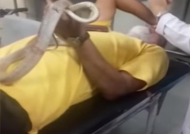 ¡Aquí está la víbora! Un indio ingresa en el hospital con la serpiente que lo mordió