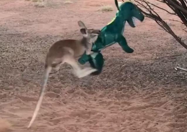 El combate del siglo: ¿podrá un canguro con un tiranosaurio?