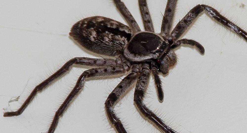 Una araña cangrejo