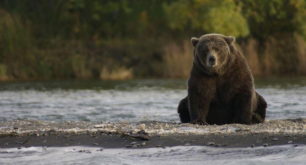 Un oso (imagen referencial)