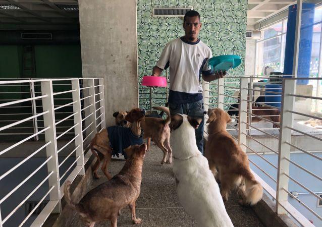 La atención en el centro veterinario integral de Nuevo Circo