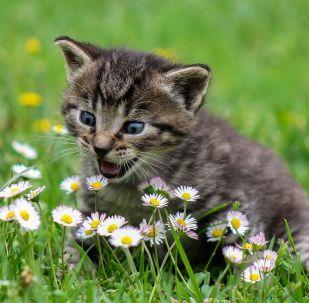 Un gato pasea por un campo de flores
