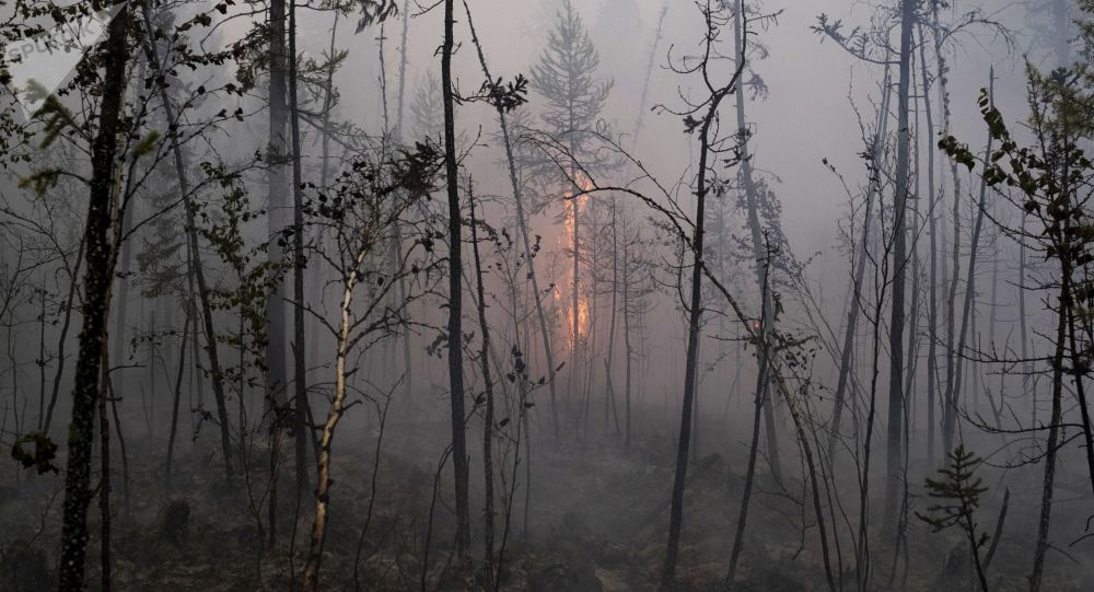 Incendios forestales en Siberia