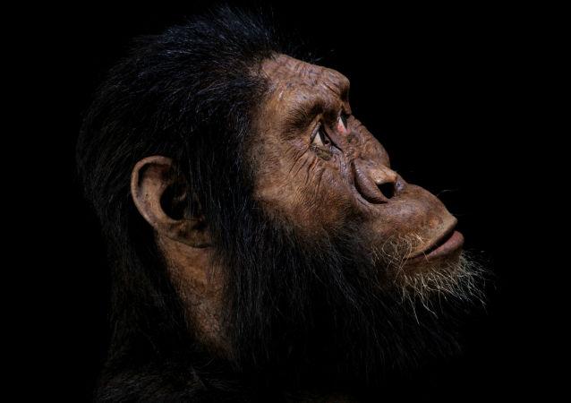 Reconstrucción del Australopithecus anamensis realizada por John Gurche, basada en el cráneo descubierto en Etiopía en 2016