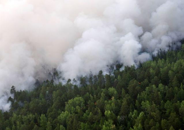 Incendios forestales en la región rusa de Krasnoyarsk