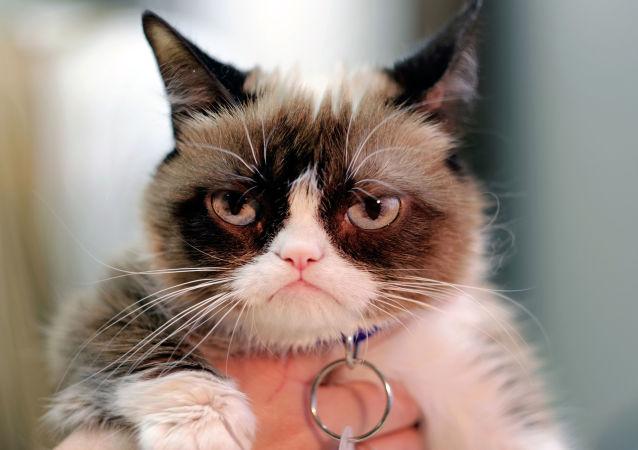 Grumpy cat, la gata gruñona