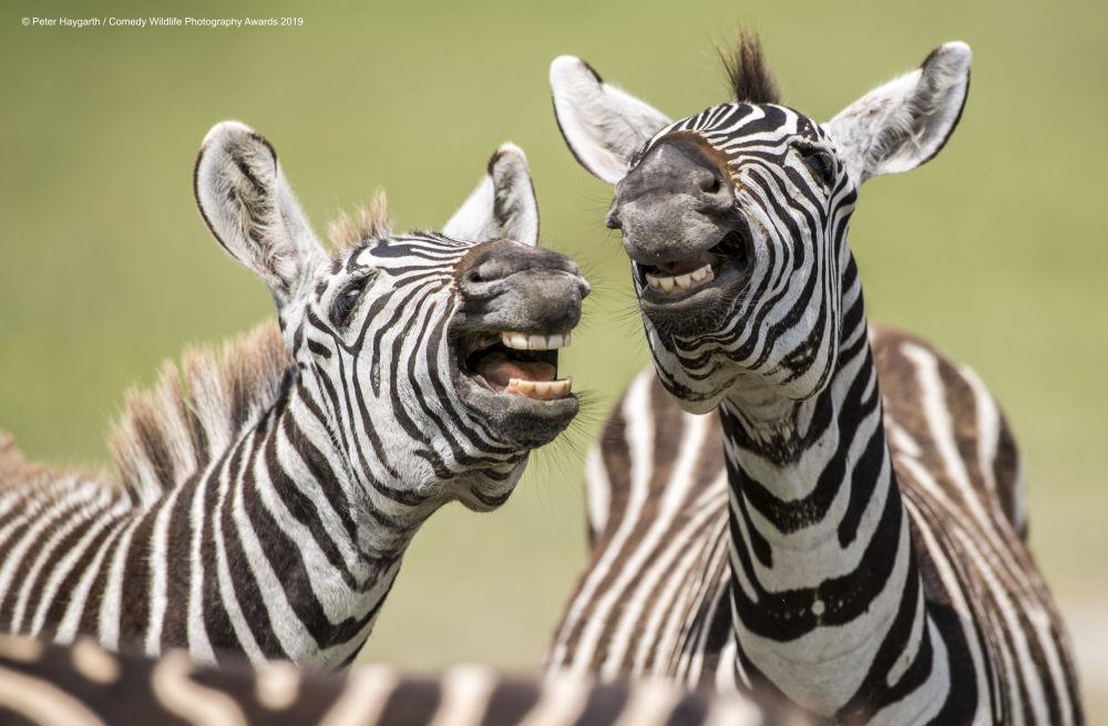 Las fotos de animales más graciosas y divertidas de 2019