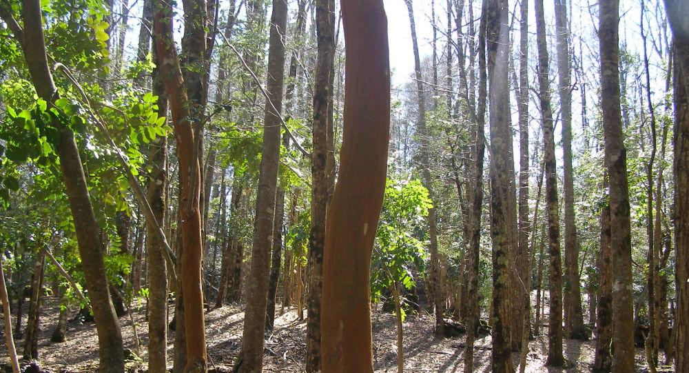 Bosque nativo chileno