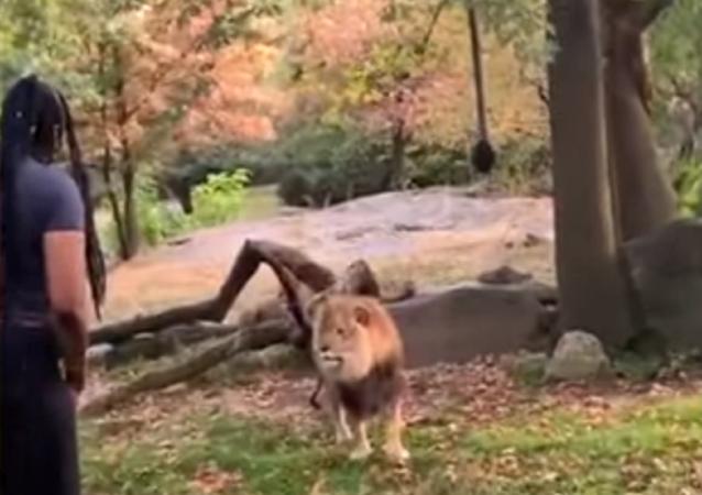 Una mujer se cuela en el zoo... para enseñarle su baile a un león
