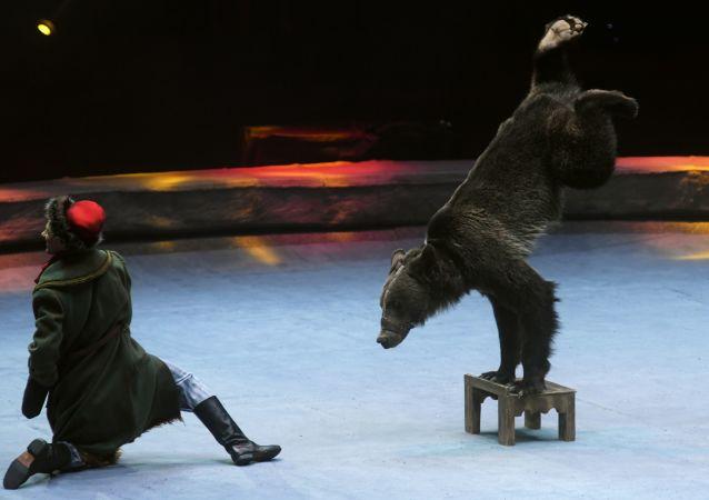 Un domador con un oso, imagen referencial