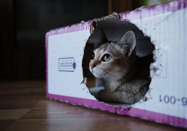 Un gato en una caja