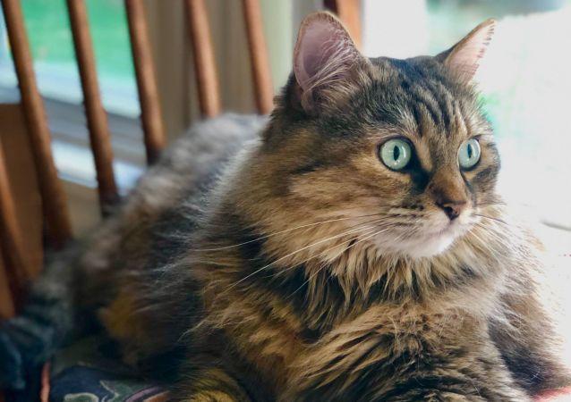 Un gato gordo, imagen referencial