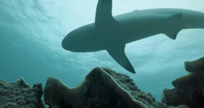 Conoce al dentista de los tiburones