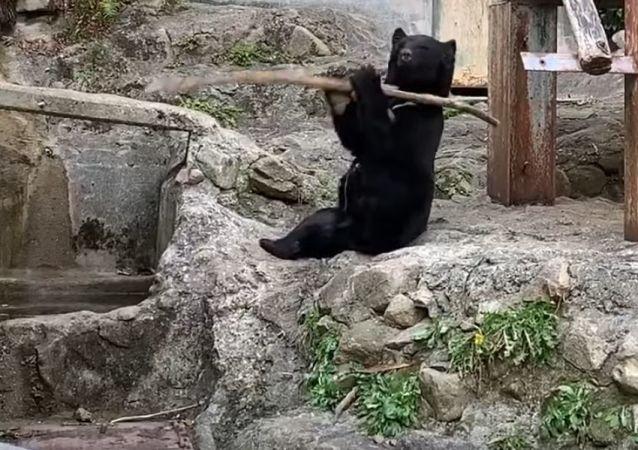 Kung-fu oso