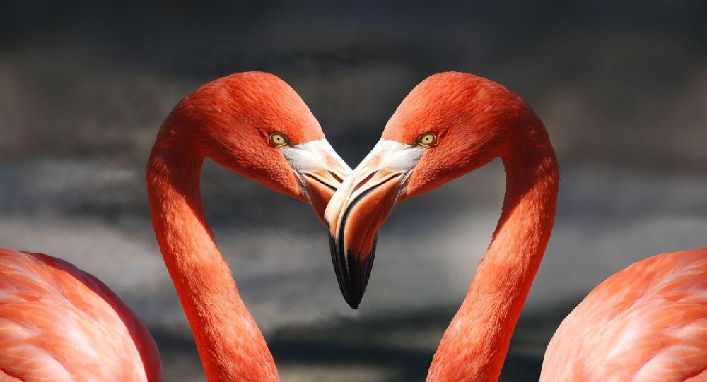 Dos flamingos, referencial