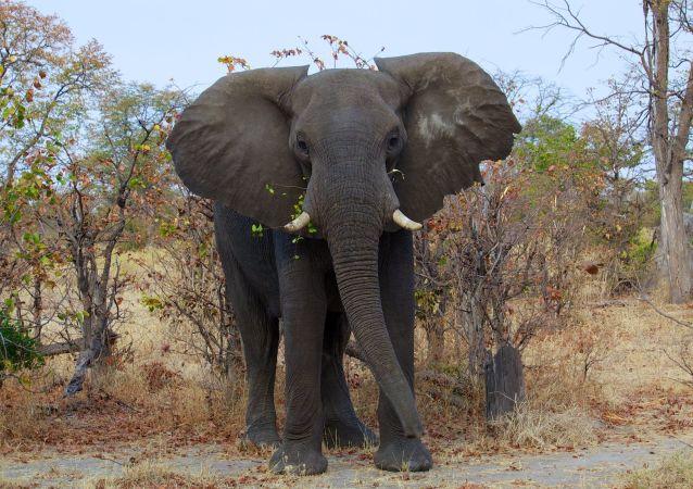 Un elefante (imagen referencial)