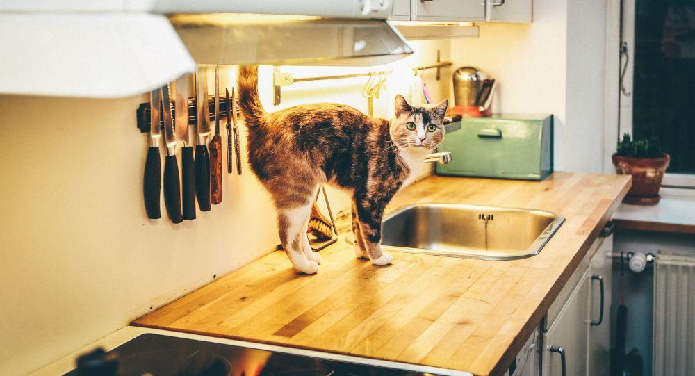 Un gato en una cocina (archivo)