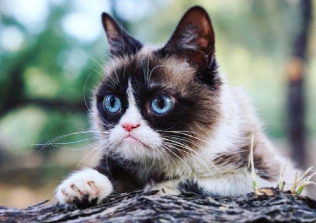 Grumpy Cat, foto de archivo