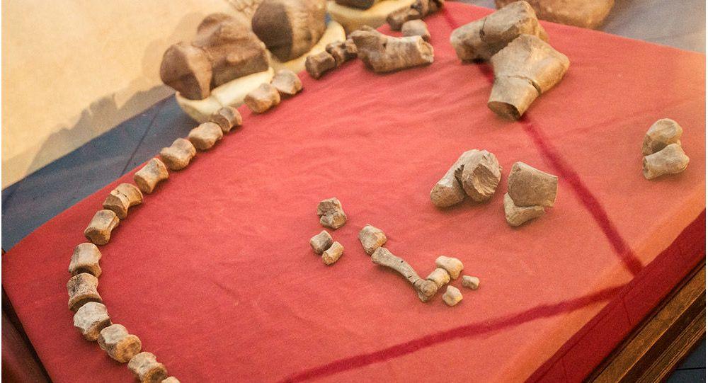 Fósiles encontrados por investigadores del Conicet en El Calafate