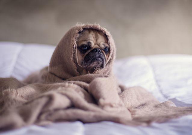 Un perrito con falta de sueño (imagen referencial)