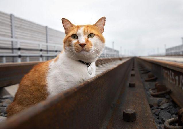 Móstik, el gato del puente de Crimea
