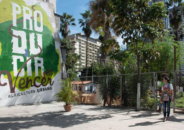 Huerto organoponico Bolívar 1 busca traer parte de la cultura de la siembra a la ciudad