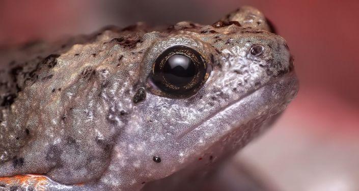 Una rana