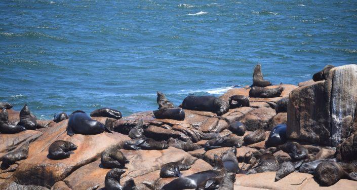Reserva de lobos marinos en Cabo Polonio