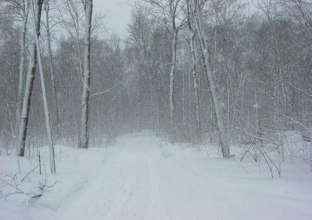 Un campo nevado (archivo)