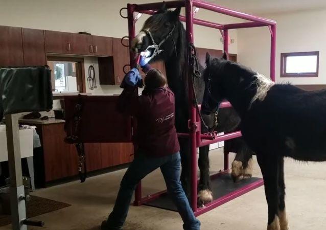 Tratamiento dental de un caballo
