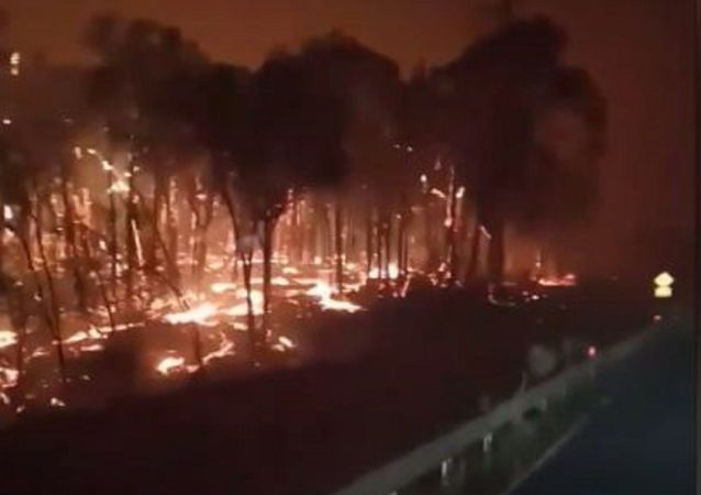 Este es el infernal paisaje que dejan los incendios en Australia