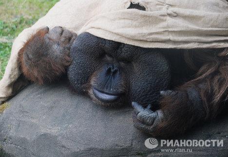 Siesta animal en el Zoológico de Moscú