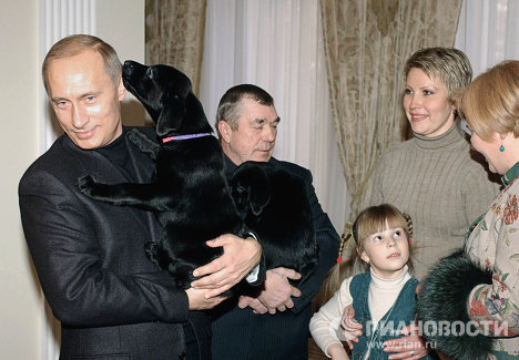 Щенки лабрадора Кони - подарок В.Путина А.Белевцу и Кате