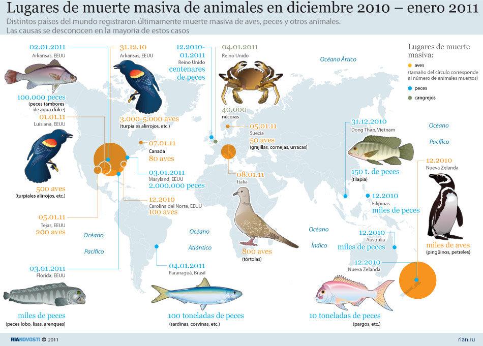 Resultado de imagen para infografia defensa animales